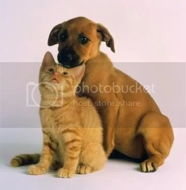 DOG AND CAT PIC Pictures, Images and Photos
