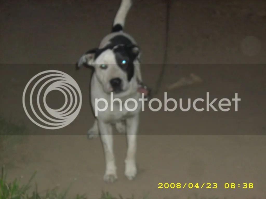 dog photo: dog animales002.jpg