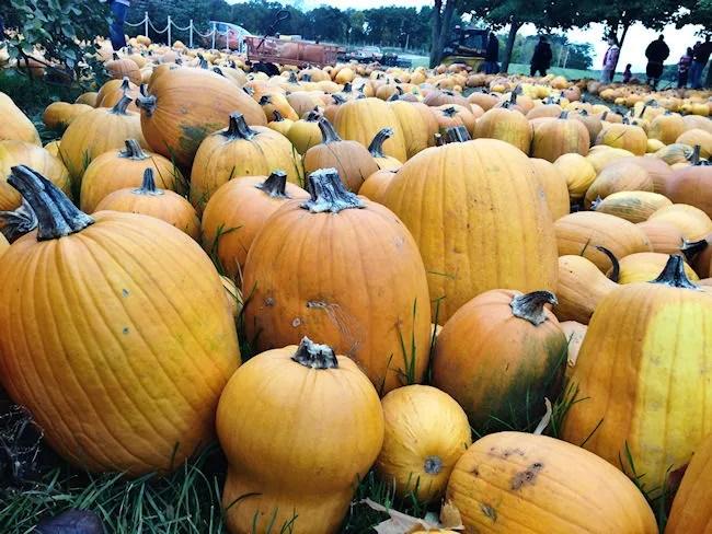 Gene The Pumpkin Man