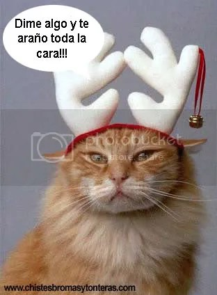 gato-navidad.jpg image by LoganMeriBlog