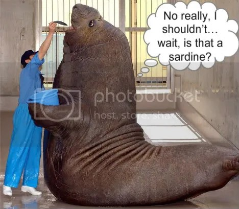 https://i1.wp.com/i292.photobucket.com/albums/mm19/Sssaam1/big-walrus-737134-1.jpg