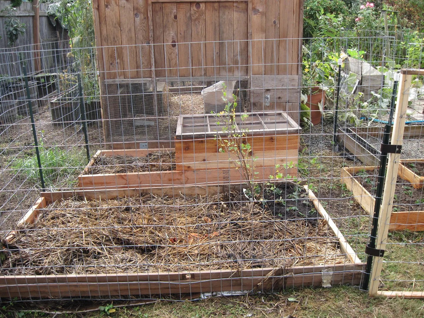 quail coop out of eden