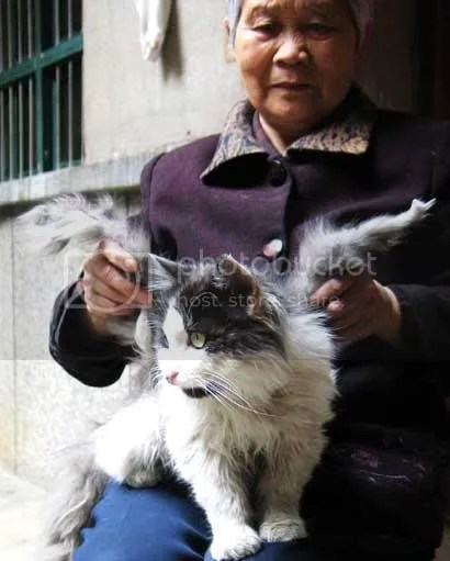 chinese cat grows wings