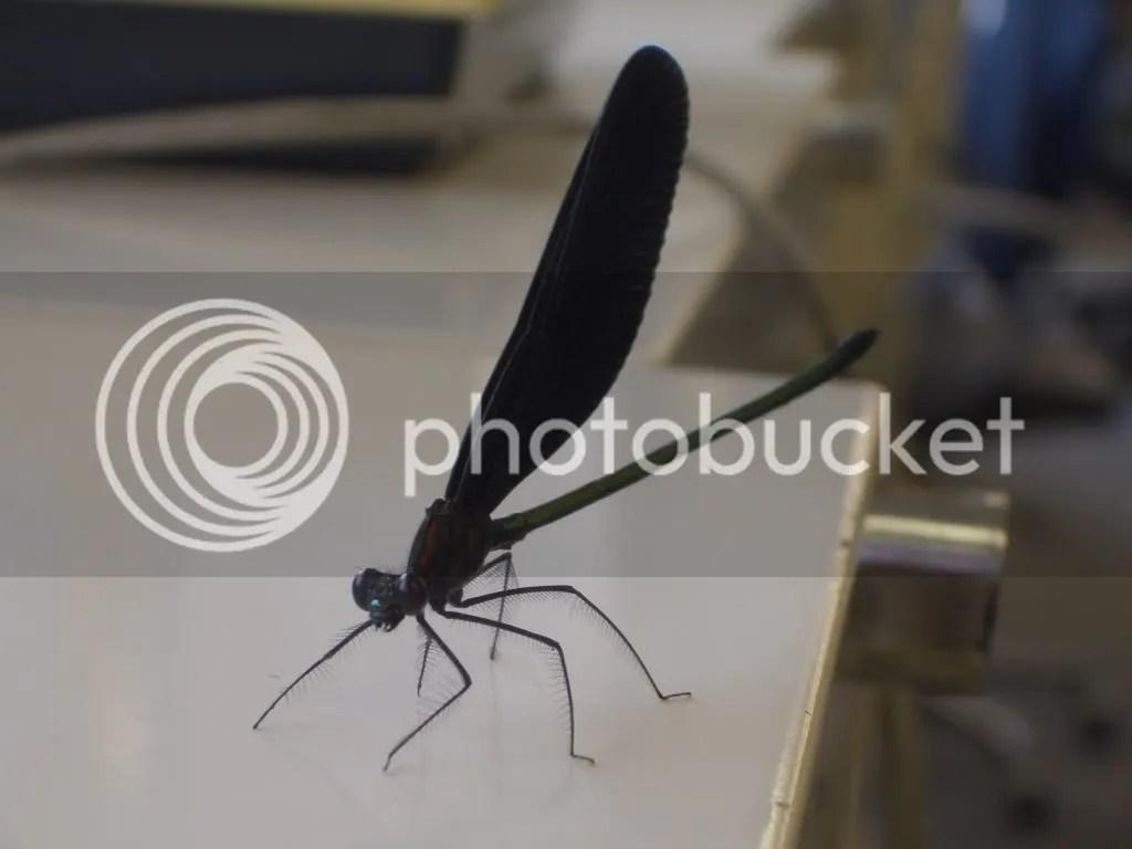 Dragonfly again