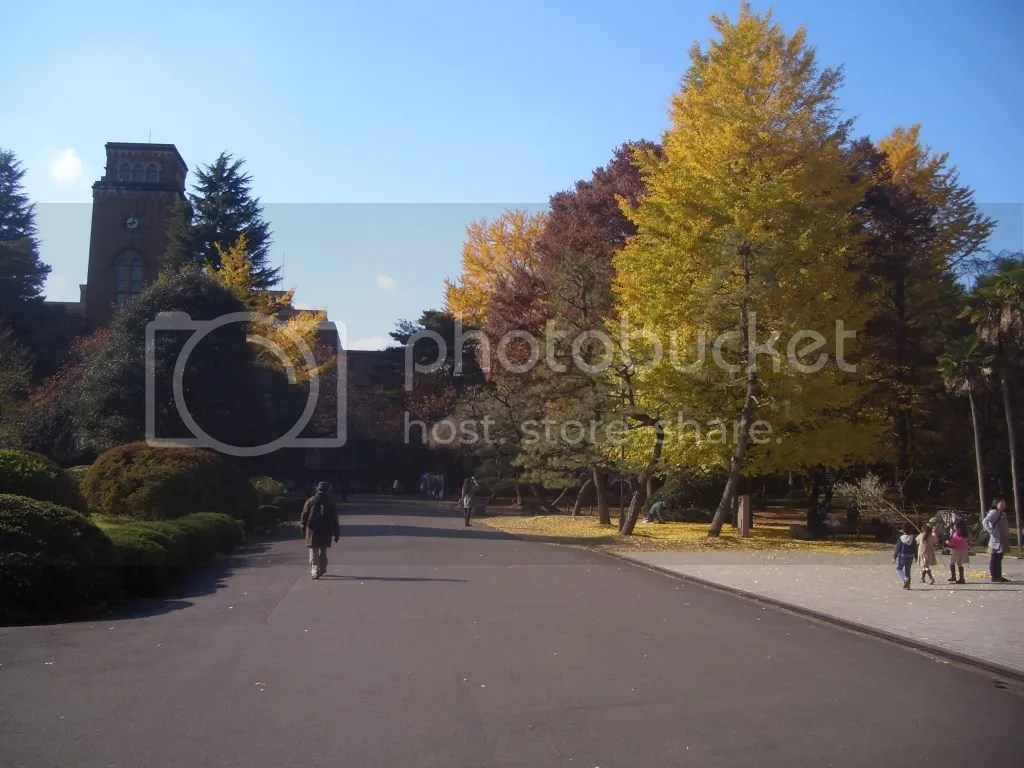 a path with some fall foliage