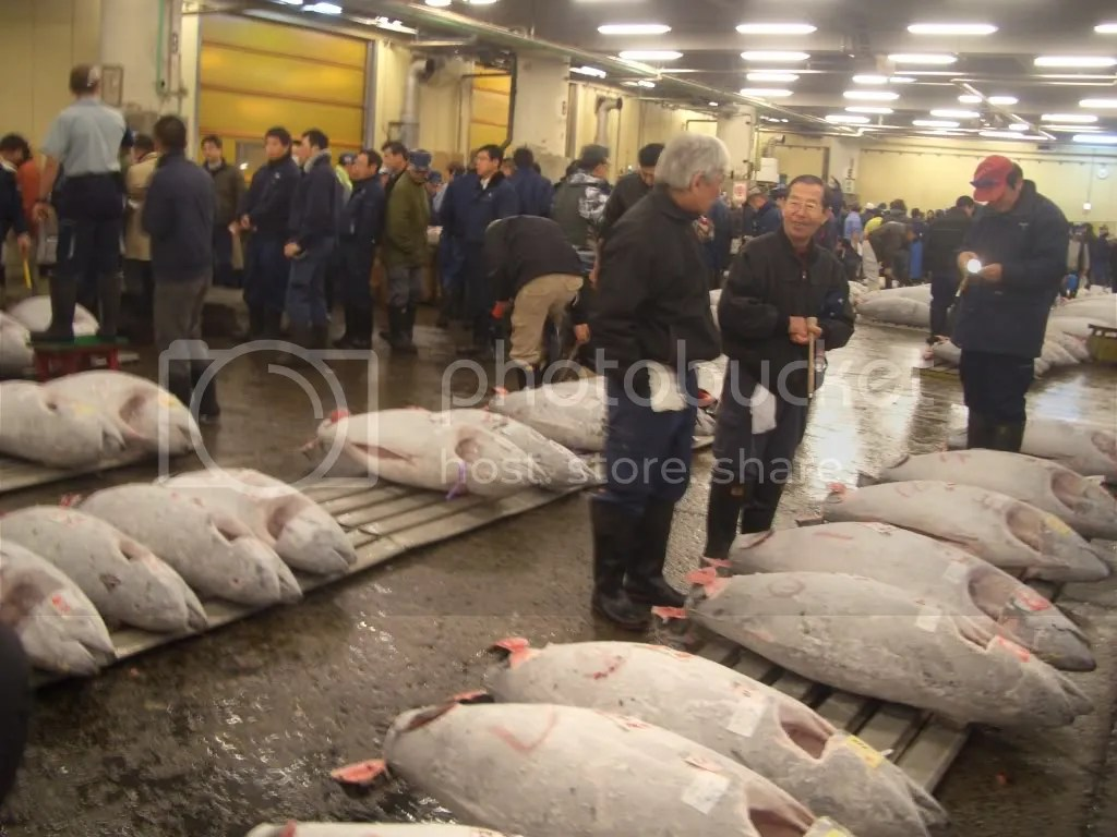 Tuna, ready to be sold