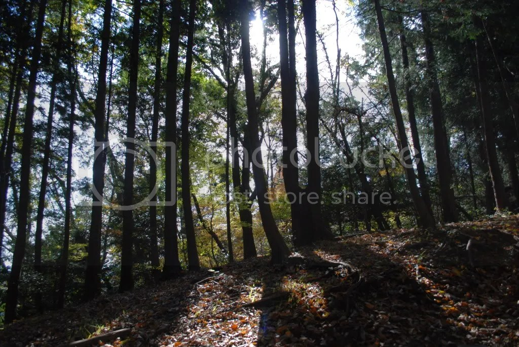 Light peeking through the trees