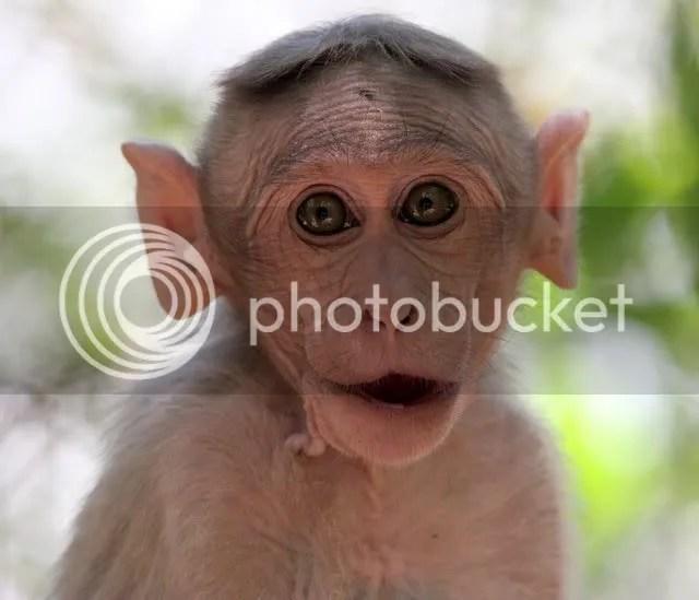 100409 macaque awake nh