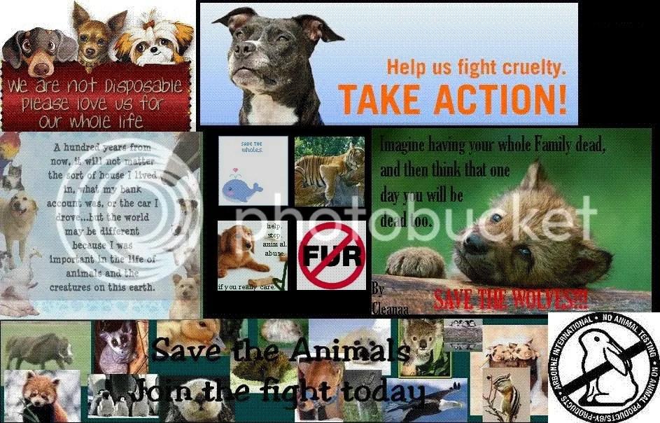 save me animals
