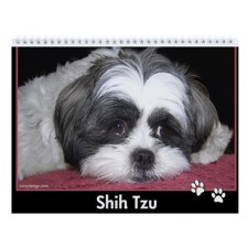 Shih Tzu Calendar