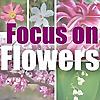 WFIU   Focus on Flowers
