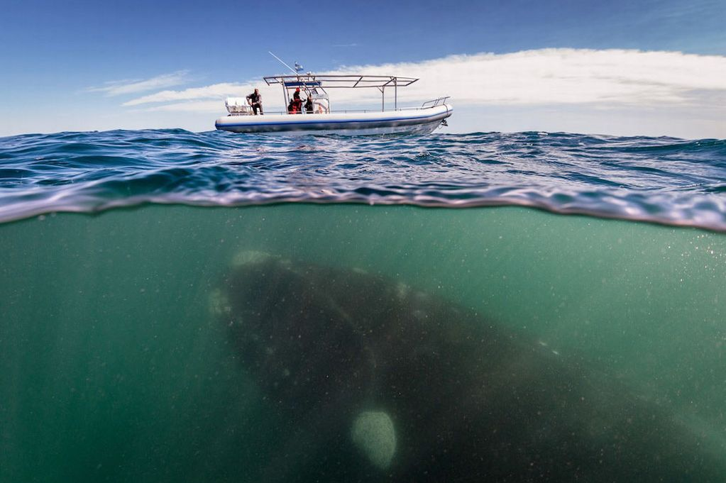 Fotografías extremas a ballenas