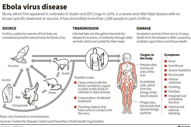 Ebola Virus Graphic