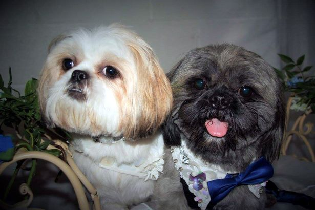 Elvis and Bella's Dog wedding