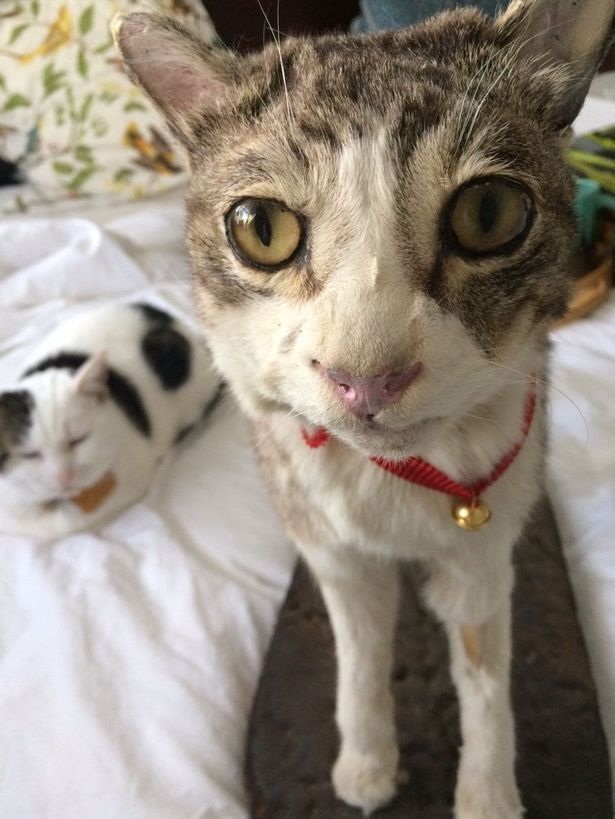 Husband buys wife taxidermy cat for anniversary, then she posts ad on eBay