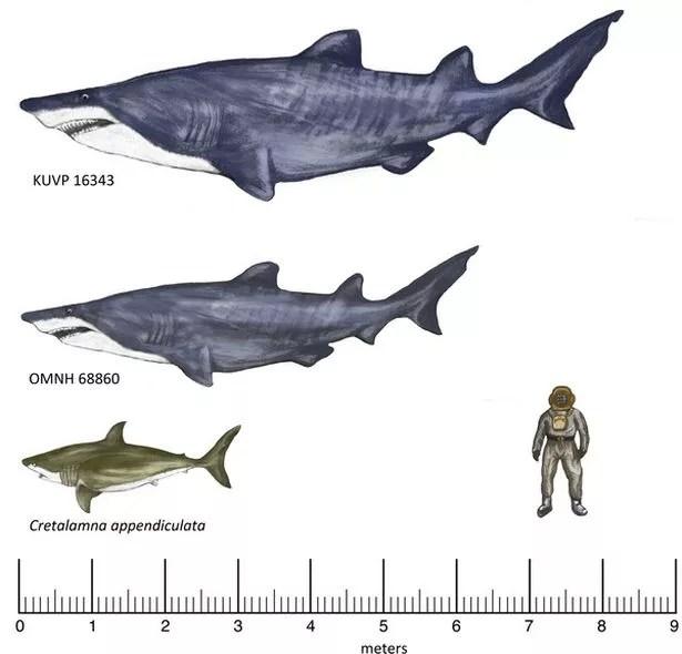 Tubarões Super: A mais recente mega-Jaws é ainda maior do que estes impressões do artista de outro tubarão encontradas no Texas no início deste ano