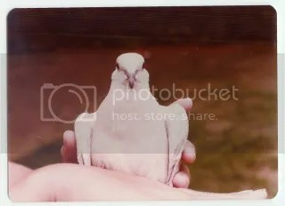 1977 photograph of scott and his pet bird