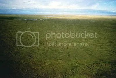 This IS a picture of ANWR where they want to explore and drill