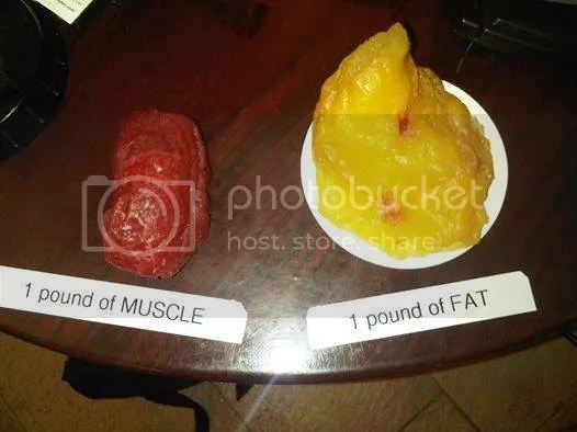 photo A POUND OF FAT.jpg