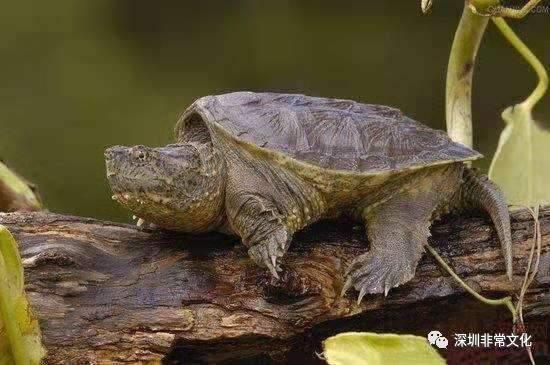 常見的烏龜種類 - 壹讀