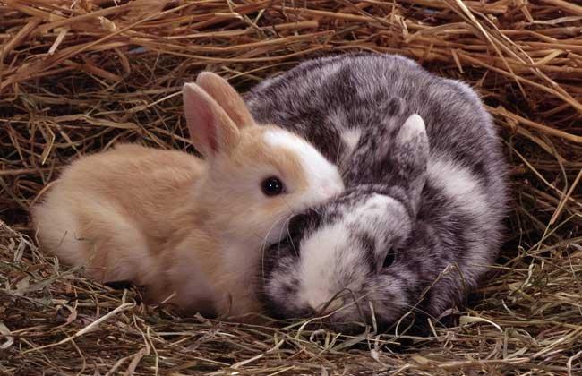 迷你兔多少錢一隻? - 壹讀
