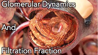 Renal Physiology - Glomerular dynamics & Filtration Fraction