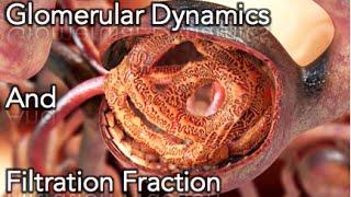 Renal Physiology - Glomerular dynamics & Filtration Fraction