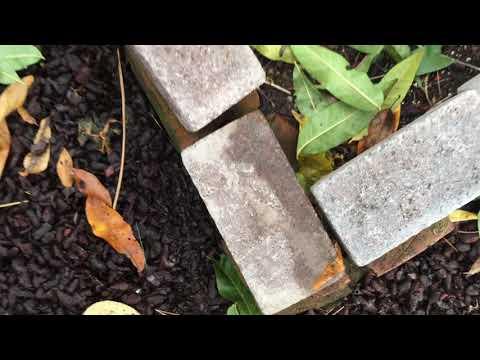 Styxhexenhammer666 Garden Update 10/24/2018