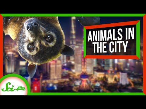 6 Animals Living Their Best Lives in Cities | Synurbic Species