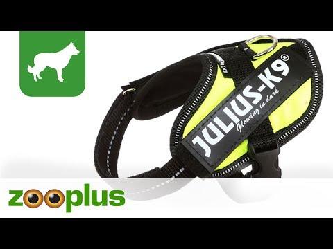 Leuchtendes Hundegeschirr | Julius K9 IDC® Powergeschirr | zooplus