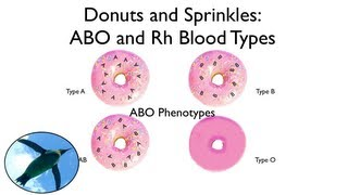 Blood Types Explained