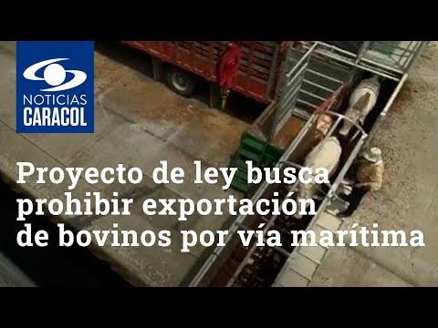 Proyecto de ley busca prohibir exportación de bovinos por vía marítima desde Colombia