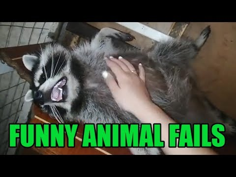 Funny Animal Fails Compilation || Funny Videos