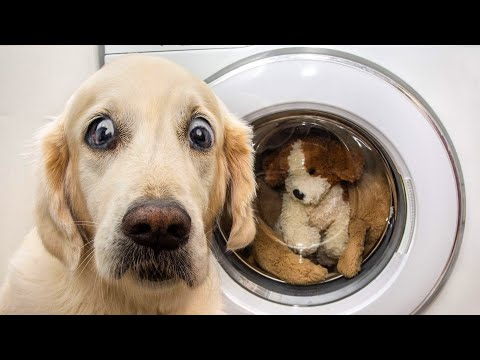 👍 Best Funny Dogs 🐶 And Cats 😹 Of The Month -Try Not To Laugh Challenge 2020