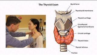 Thyroid Exam and Physical Diagnosis of Thyroid Disease