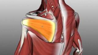 Rotator Cuff Anatomy Tutorial