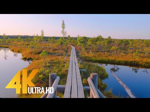 Hiking through Beautiful Landscapes of Latvia - 4K Virtual Hike with Soothing Nature Sounds