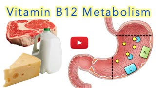 Vitamin B12 Metabolism - MADE EASY