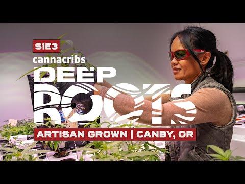 "Marine Veteran Hydroponically Grows 46% THCA Cannabis Strain ""Sweet Melissa"""