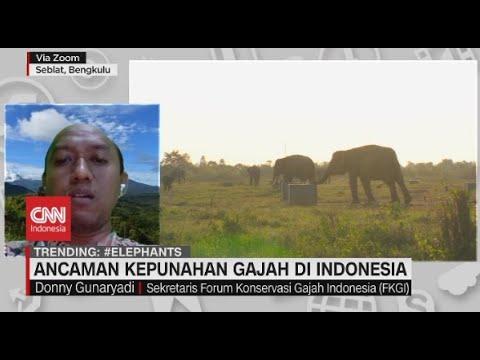 Ancaman Kepunahan Gajah di Indonesia