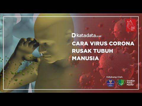 Cara Virus Corona Rusak Tubuh Manusia   Katadata Indonesia