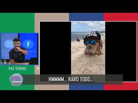 Entierran un perro en una playa de Rio de Janeiro