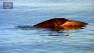 Top 6 Lake & River Monster Sightings