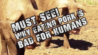 SHOCKING MUST SEE! WHY Eating PORK is BAD For HUMANS - #Pork