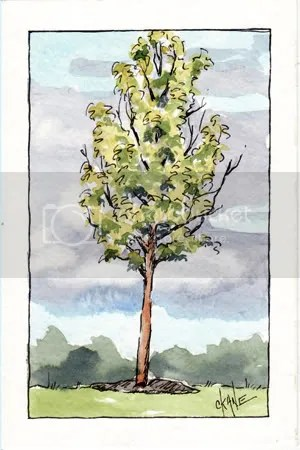 Parking Lot Tree Sketch - Watercolor