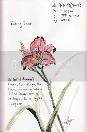 Fading Fast Lily Sketch - Watercolor & Ink
