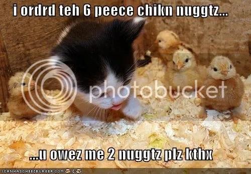 cutecat.jpg Funny cat image by Moonlight32x