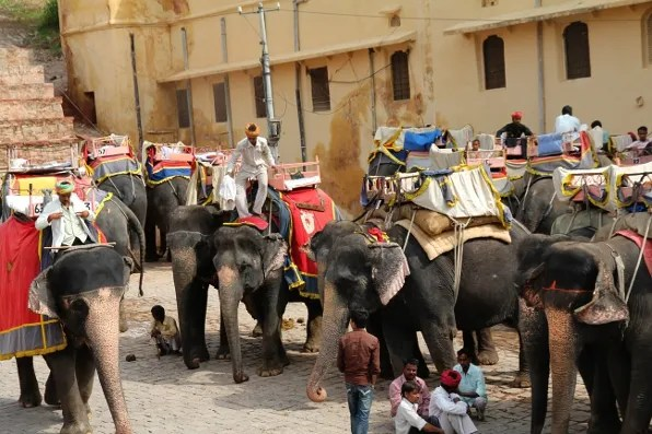 Elephant Rides in Jaipur, India