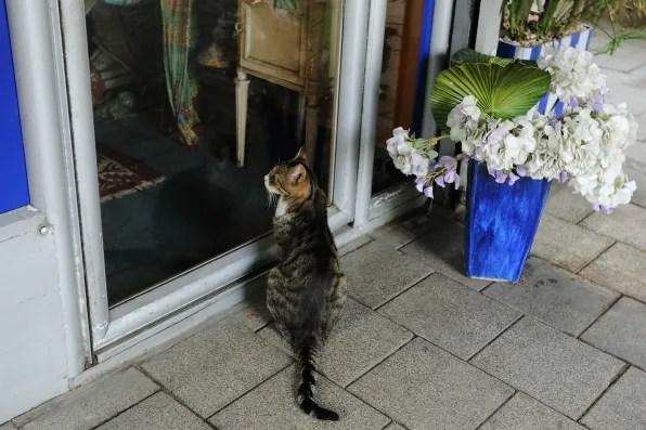 A cat looking through the door.