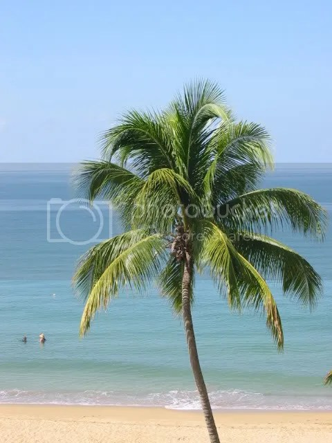 Palm Tree Pictures, Images and Photos